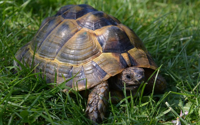 testudo valdarno allevamento amatoriale di tartarughe e