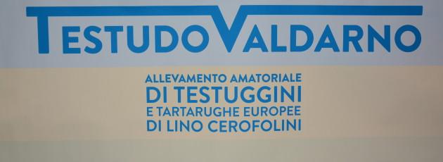 Foto fiera di Arezzo 3