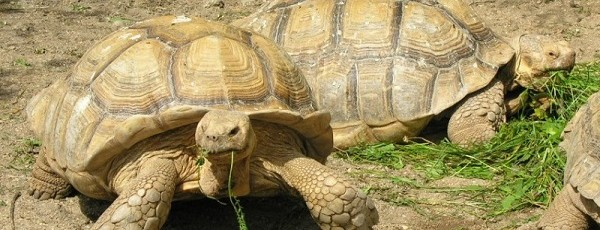 Czech Rebublic, Plze?,  Zoologická a botanická zahrada m?sta Plzn?.  Keywords: ¸ivo?ich